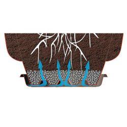 CALYCANTHUS FLORIDUS ou arbre aux anémones