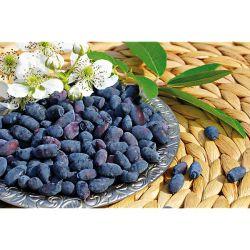 PÉTUNIA PEGASUS® TABLE BLUE STAR
