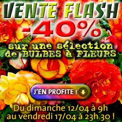 -40% sur une sélection BULBES à FLEURS !