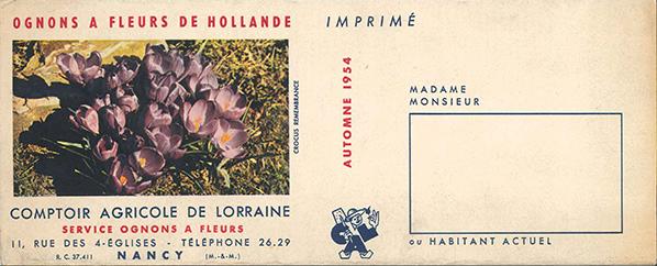 ognons fleurs hollande automne 1954