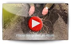 Conseils pour la plantation des asperges - Vidéo BAUMAUX