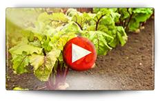 Semis des betteraves - Vidéo BAUMAUX