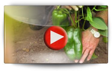 Découvrez les BOMOTTES GREFFÉES - Vidéo BAUMAUX