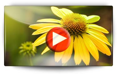 Bomottes Vivaces - Vidéo BAUMAUX