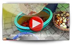 Conseil pour la plantation des bulbes en pot - Vidéo BAUMAUX