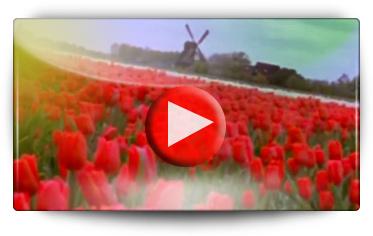 Graines Baumaux vous présente la culture des bulbes en Hollande - Vidéo BAUMAUX