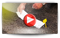 Conseils pour les semis des chicorées - Vidéo BAUMAUX