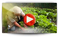 Semis de chicorées et de choux chinois - Vidéo BAUMAUX