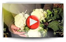 Choux : différentes facons de les semer - Vidéo BAUMAUX