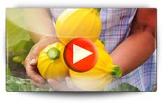 Semis et repiquage des cucurbitacées - Vidéo BAUMAUX