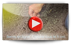 Comment semer le fenouil - Vidéo BAUMAUX