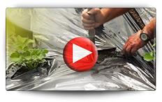 Conseils pour plantation des fraisiers en pot film noir - Vidéo BAUMAUX