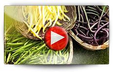 Culture des haricots nains - Vidéo BAUMAUX