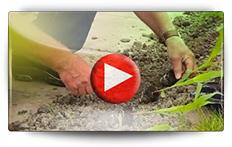 Conseil pour la culture du maïs - Vidéo BAUMAUX