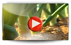 OIGNON F1 HYLANDER, vers une culture moins polluante… - Vidéo BAUMAUX