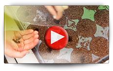 Conseils pour la culture de la pastèque - Vidéo BAUMAUX
