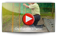 Découvrez la culture des petits pois comme autrefois - Vidéo BAUMAUX