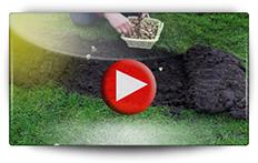 Conseil pour la plantation des crocus - Vidéo BAUMAUX