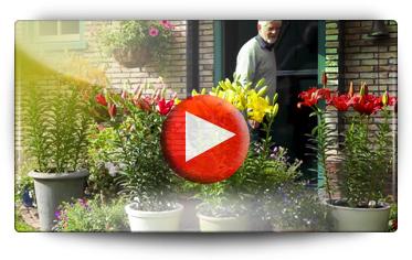 Conseil pour la plantation des lis en pleine terre ou en pots - Vidéo BAUMAUX