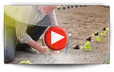 Conseils pour vos semis des piments et poivrons - Vidéo BAUMAUX