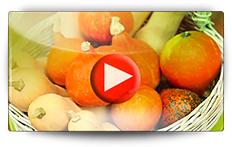 Conseils pour la culture des potirons et de ses cousins - Vidéo BAUMAUX