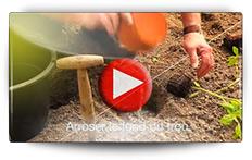 Conseils pour vos semis de tomates - Video BAUMAUX