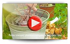 Plantation végétaux conteneur et racines nues - Vidéo BAUMAUX
