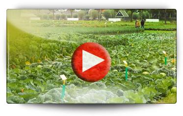 Découvrez les jardins d'essais BEJO par Graines BAUMAUX - Vidéo BAUMAUX