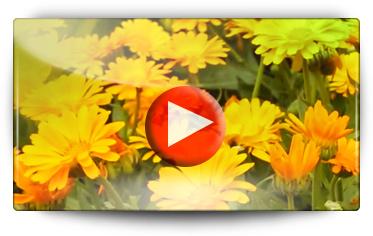 visite du jardin d'essai graines florales Volmary - Vidéo BAUMAUX