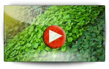 Graines Baumaux en visite chez Volmary, fournisseur de jeunes plants - Vidéo BAUMAUX