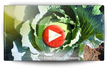 Découvrez les champs d'essais SAKATA par Graines BAUMAUX - Vidéo BAUMAUX