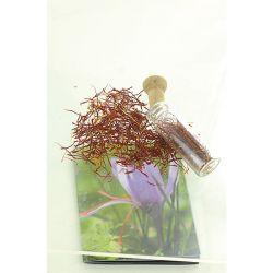 TULIPE viridiflora EXTREME MIX