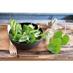 Pivoine Herbacée De Jardin Patio Peony™ Madrid