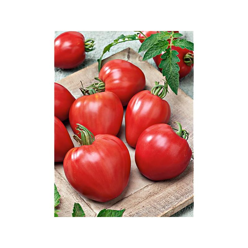 TOMATE F1 GRAPPELINA