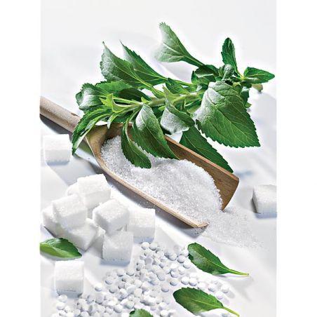 HERBE à SUCRE (stevia rebaudiana)