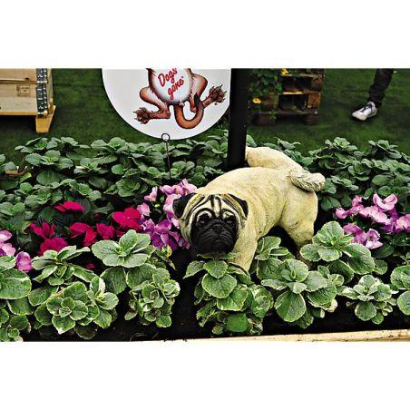 PLANTE ANTI-CHAT et CHIEN KICK off CAT (coleus canina)