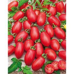 VEREDELUNGSUNTERLAGEN für Gemüsesorten F1 SPIRIT