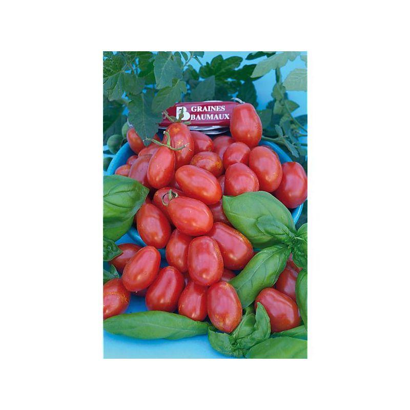 VEREDELUNGSUNTERLAGEN für Gemüsesorten F1 RADAR