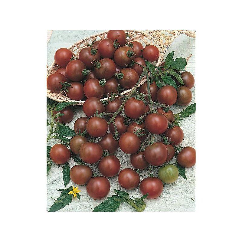 BASILIKUM SWEETY 40 Samen für Tomate Mozarella Suppen süßlicher Geschmack