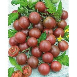 BASIL GRAND VERT organic