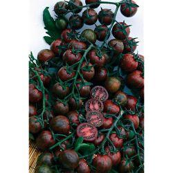 BASIL GRECO a PALLA organic