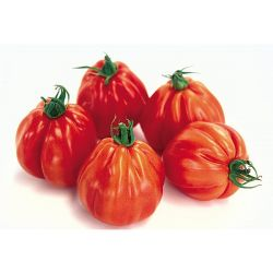 KIT COLOR TOMATO