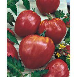 Tomate Greffée f1 Philona