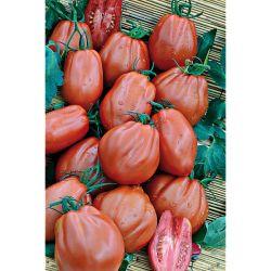 Tomate Greffée f1 Perlino