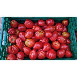 Tomate Greffée f1 Atyliade