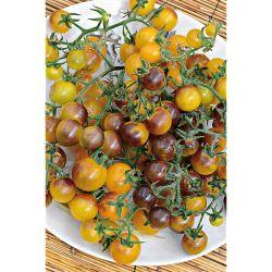 Tomate Greffée f1 Jouvance