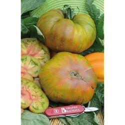 Tomate Greffée f1 Montfavet 63/5
