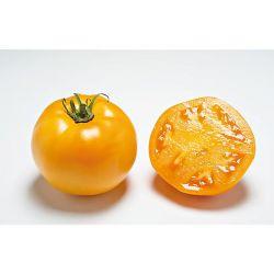 Tomate Greffée f1 Myriade