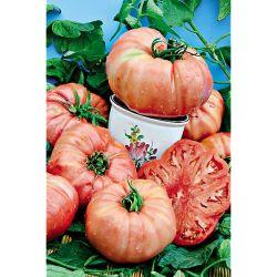 Tomate Greffée Noire De Crimée