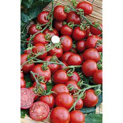 Tomate Greffée f1 Summer Frolic